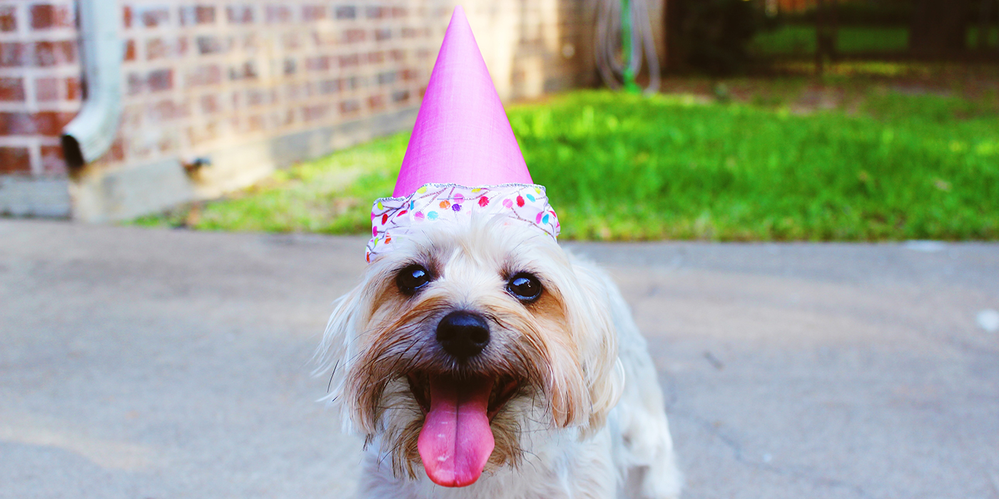 A little dog in a pink party hat